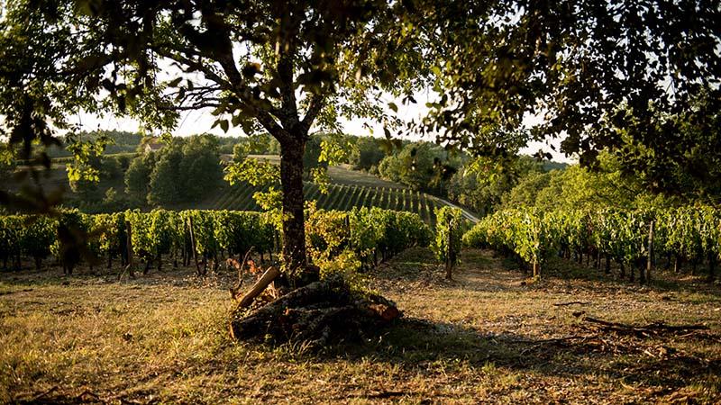 Terroirs-du-Causse-Alain-Auzanneau-3