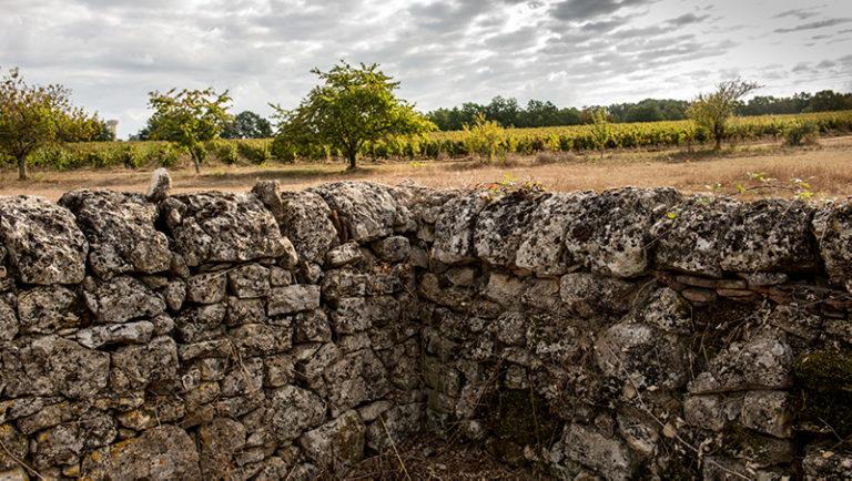 Terroirs-du-Causse-Alain-Auzanneau-5